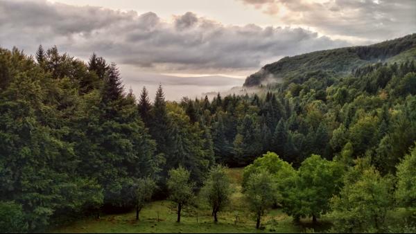 Bossen van Gorski Kotar, Kroatie